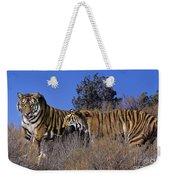 Bengal Tigers On A Grassy Hillside Endangered Species Wildlife Rescue Weekender Tote Bag