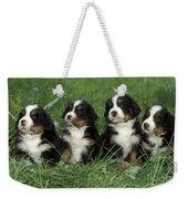Bernese Mountain Puppies Weekender Tote Bag