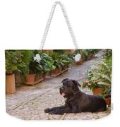 Big Black Schnauzer Dog In Italy Weekender Tote Bag