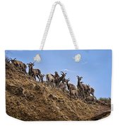 Bighorn Sheep At Blue Mesa Reservoir Weekender Tote Bag