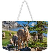 Bighorn Sheep Of Lake Minnewanka Weekender Tote Bag