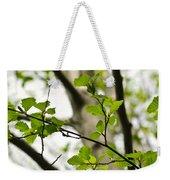 Birch Tree In Spring Weekender Tote Bag