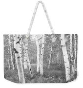 Birch Trees In A Forest, Acadia Weekender Tote Bag