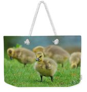 Bird - Baby Goose -leader Of The Pack Weekender Tote Bag