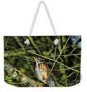 Bird - Baby Robin Weekender Tote Bag by Paul Ward