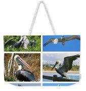 Birds - Pelicans - Boxed Cards Weekender Tote Bag