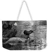 Black And White Otters In The Wild Weekender Tote Bag