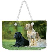 Black And Yellow Labrador Retrievers Weekender Tote Bag