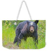 Black Bear Cub Near Road In Grand Teton National Park-wyoming Weekender Tote Bag