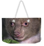 Black Bear Cub Portrait Wildlife Rescue Weekender Tote Bag