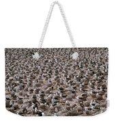 Black-browed Albatross Nesting Colony Weekender Tote Bag