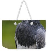 Black-chested Buzzard-eagle Weekender Tote Bag
