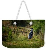 Black-crowned Night Heron At Carson Lake Wetlands Weekender Tote Bag