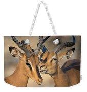 Black-faced Impalas Aepyceros Melampus Weekender Tote Bag