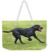 Black Labrador Playing Weekender Tote Bag