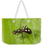 Black Scavenger Fly Weekender Tote Bag