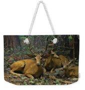 Black Tail Deer Weekender Tote Bag