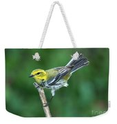 Black-throated Green Warbler, Female Weekender Tote Bag
