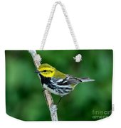 Black-throated Green Warbler, Male Weekender Tote Bag