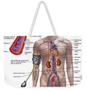 Blood Pressure And Circulatory System Weekender Tote Bag by Stocktrek Images