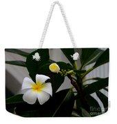 Blooming Frangipani Flower Alongside Bud Weekender Tote Bag