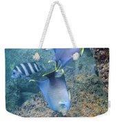 Blue Angelfish Feeding On Coral Weekender Tote Bag