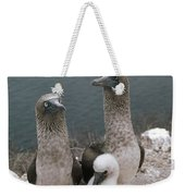 Blue-footed Booby Parents With Chick Weekender Tote Bag
