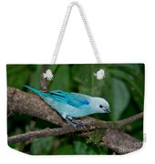 Blue-gray Tanager Weekender Tote Bag
