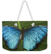 Blue Morpho - Morpho Peleides Weekender Tote Bag