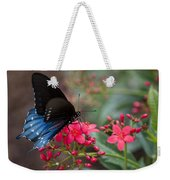 Blue Swallowtail Butterfly  Weekender Tote Bag