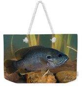 Bluegill Lepomis Macrochirus Weekender Tote Bag
