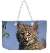 Bobcat Kitten Weekender Tote Bag
