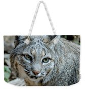 Bobcat's Gaze Weekender Tote Bag