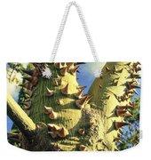 Bombacaceae - Floss Silk Tree - Chorisia Speciosa Hawaii Weekender Tote Bag