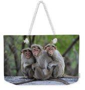 Bonnet Macaque Trio Huddling India Weekender Tote Bag