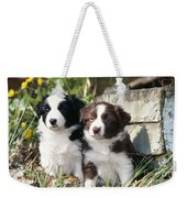 Border Collie Dog, Two Puppies Weekender Tote Bag