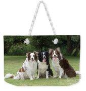 Border Collie Dogs Weekender Tote Bag