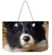 Border Collie Puppy And Wooden Wheel Weekender Tote Bag