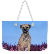 Border Terrier Dog, In Heather Weekender Tote Bag