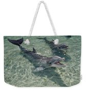 Bottlenose Dolphin In Shallow Lagoon Weekender Tote Bag