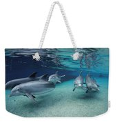 Bottlenose Dolphins In Shallow Water Weekender Tote Bag