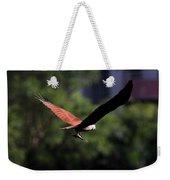 Brahminy Kite With Catch  Weekender Tote Bag
