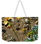 Brittlebush On Borrego Palm Canyon Trail In Anza-borrego Desert Sp-ca Weekender Tote Bag