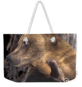Brown Bear Tackles An Itchy Foot Endangered Species Wildlife Rescue Weekender Tote Bag
