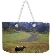 Brown Grizzly Bear In Denali National Weekender Tote Bag
