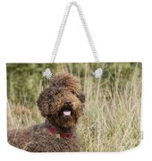 Brown Labradoodle In Field Weekender Tote Bag