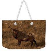 Bull Elk In Evening Light Weekender Tote Bag