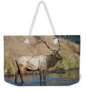 Bull Elk On The Madison River Weekender Tote Bag
