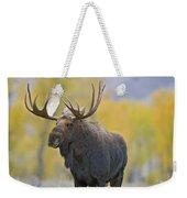 Bull Moose In Autumn Weekender Tote Bag