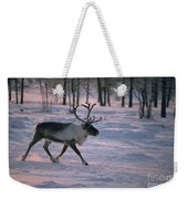 Bull Reindeer In  Siberia Weekender Tote Bag